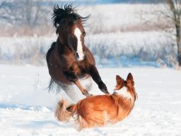 Webinar: Traditionelle Chinesische Medizin für Tiere - Block 1