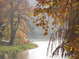 Webinar: Herbstzeit - 7 ultimative Tipps, wie du gesund durch die Erkältungszeit kommst