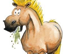 Webinar: Pferde richtig anweiden