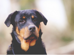 Webinar: Fütterungsprobleme bei Hund und Katze: Was tun, wenn...?