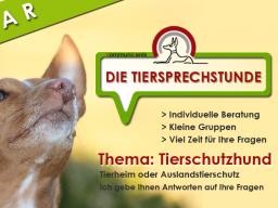 Webinar: Die Tiersprechstunde | Fragen zum Tierschutzhund