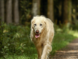 Webinar: Arthrose - Vorbeugung beim Hund