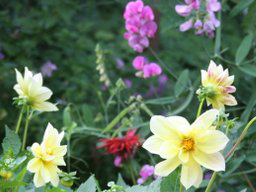 Webinar: Blüten und Kräuter