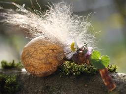 Webinar: Grundlagen des Pflanzenschamanismus