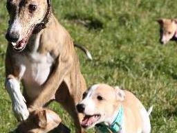 Webinar: Hundezucht und Ernährung