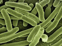 Webinar: Darmbakterien & Darmflora - Was hält den Darm von Hunden und Katzen gesund?