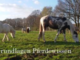 Webinar: Grundlagen Pferdewissen - Tiergerechte Haltung und Umgang
