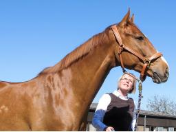 Webinar: Das alte Pferd homöopathisch unterstützen