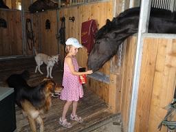 Webinar: Tierpsychologie und karmische Zusammenhänge von Menschen und Tieren