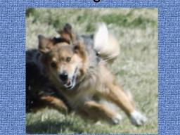 Webinar: Wie auch Dein Hund zuverlässig kommt
