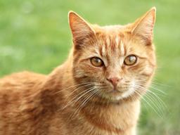 Webinar: Offene Sprechstunde Katzen BARFen & Katzen-Ernährung