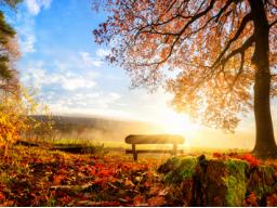 Webinar: Herbst-Zeit - Stärkung des Immunsystems und wie Du gut durch die Erkältungszeit kommst