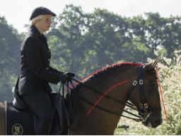 Webinar: Wie wird das Pferd durch seine Genick, Hals und Schulterposition in seinem Gangbild beeinflußt?