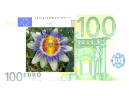 Webinar: Regiert Geld auch Deine Welt ?