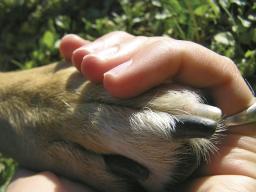 Tier und Mensch - Systemisches Denken