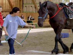 Webinar: Junge Pferde vertrauensvoll ausbilden Teil 2
