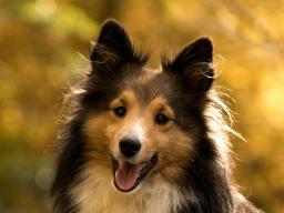 Webinar: Kommunikation für Hundetrainer