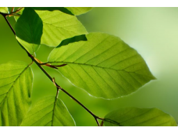 Webinar: Element Holz - Frühlingserwachen in Ihrem Institut