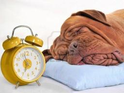 Webinar: Schlaflos im eigenen Bett!?