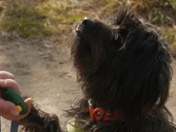 Webinar: Ausbildung zum Kindergartenhund