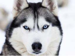 Webinar: Begegne deinem Krafttier