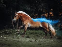 Webinar: Einstieg in die Pferdefotografie