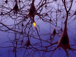 Webinar: Hirnforschung für Trainer - Lernen und Gedächtnis