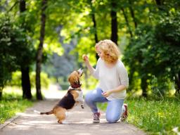 Tricksen mit dem Hund - Teil 1