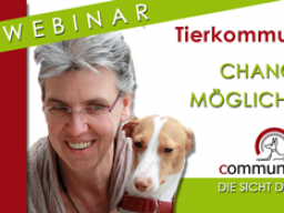 Webinar: Chancen & Möglichkeiten der Tierkommunikation