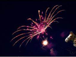 Webinar: *Mache die Silvesternacht zu Eurem (Mensch & Tier) Event*