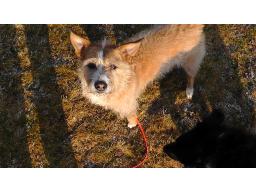 Webinar: Ein Hund? Vorüberlegungen VOR der Anschaffung