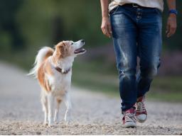 Webinar: Beziehungsgestaltung für eine entspannte Mensch-Hund-Beziehung