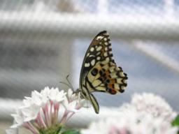 Webinar: Aromatherapie