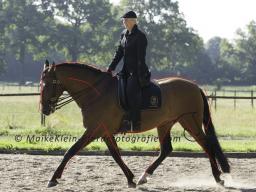 Webinar: Teil 1) Systematische Gymnastizierung des Pferdes, Anatomie des Pferdes