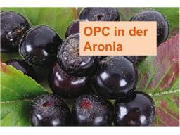 Webinar: OPC- Der Antioxidantienbooster aus der Natur