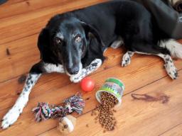 Webinar: Belohnungsmöglichkeiten im Hundetraining