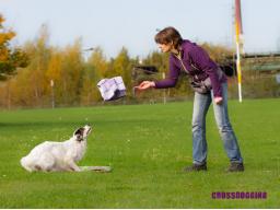 Webinar: Crossdogging für Hundetrainer - Einsteigerwebinar