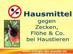 Webinar: Natürlich gegen Zecken, Flöhe & Co bei Haustieren - aber wie?