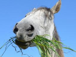 Webinar: Ausbildung zum Pferdeernährungsberater