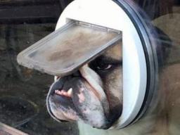 Webinar: Übergewicht beim Hund und die Auswirkungen auf den Bewegungsapparat