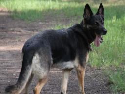 Webinar: Wie lernt mein Hund?
