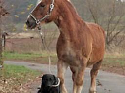 Webinar: Pferde führen