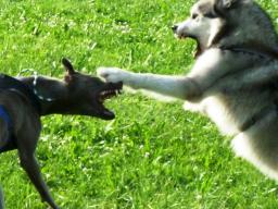 Webinar: Hundetraining im Fernsehen, Schau genau!