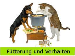 Webinar: Fütterung & Verhalten beim Hund