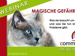 Webinar: Katzen - magische Gefährten. Was Ihre Katze braucht um glücklich zu sein und was Sie tun können, wenn es Probleme gibt.