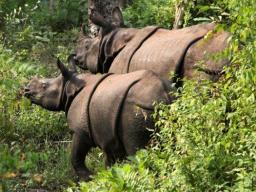 Webinar: Facettenreiches Nepal