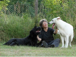 Webinar: Was hast du gesagt? - Teil 2: Warum Hunde nicht hören, wenn Menschen zuviel reden