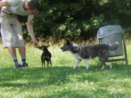 Webinar: Hunde-Alltags-Quiz T3
