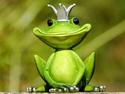 Webinar: Kinesiologie am Tier - Hokuspokus oder Therapie?
