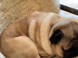 Webinar: Sylvester Entspannt geniessen mit Hund und Katz